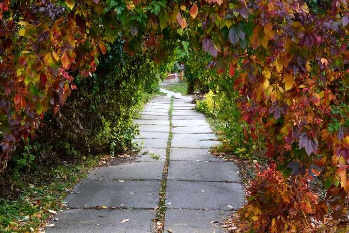 <p>Осінь розфарбувала рослини в ботанічному саду</p> <p> — Ботанічний сад у Києві буяє осінніми фарбами (фото)»></p></div> <div class=