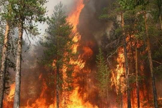 В Австралії вирують небувалі лісові пожежі. Двоє людей загинули, семеро зникли безвісти