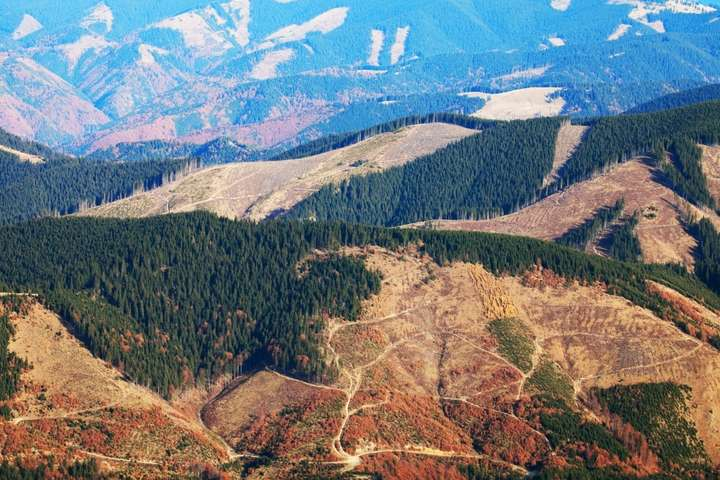 Голос України» опублікував закон про заборону вирубки лісу на схилах Карпат  - Главком