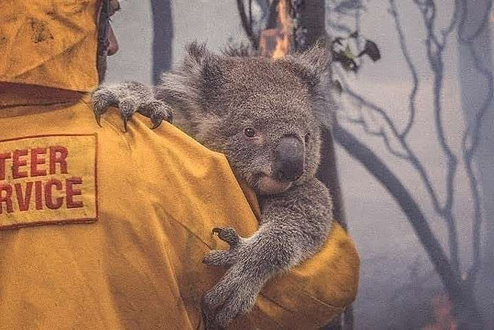 Збитки від кліматичних пожеж в Австралії