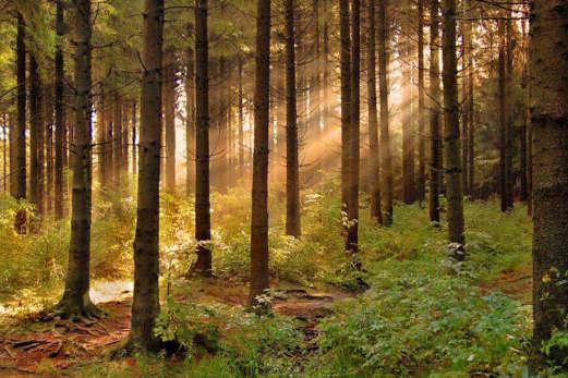 Суд повернув державі 26 га лісу під Києвом, що прибрали до рук власники гольф-клубу