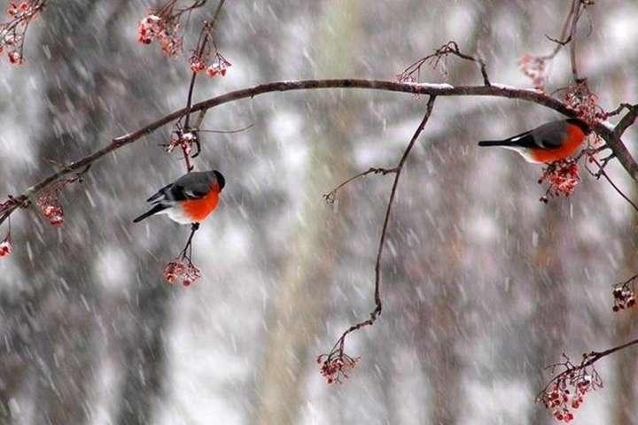 Сьогодніу східних областях та на півночі Лівобережжя місцями невеликий мокрий сніг та дощ - Погода в Україні на суботу: місцями мокрий сніг і дощ, температура до +9