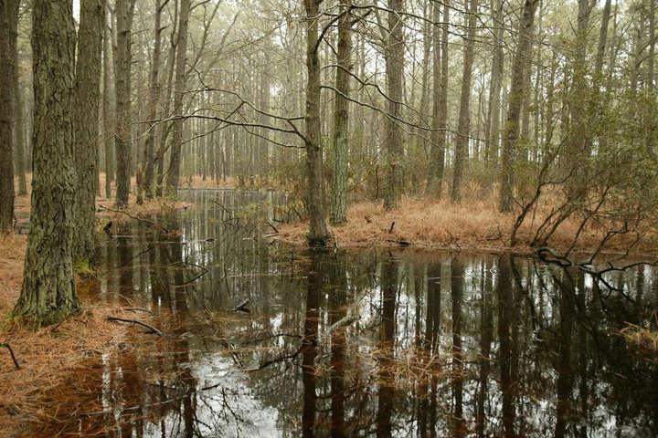 На Житомирщине женщина утонула в болоте