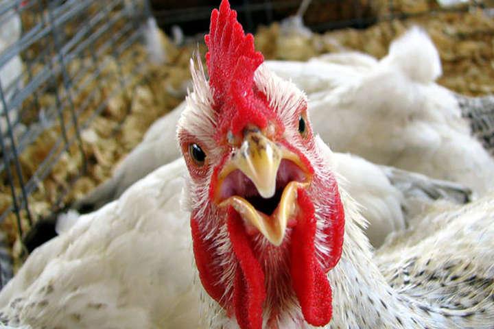 ЄС скасував заборону на м'ясо птиці з України