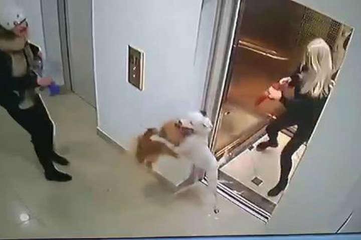 У ліфті одеської багатоповерхівки бійцівський собака загризла шпіца