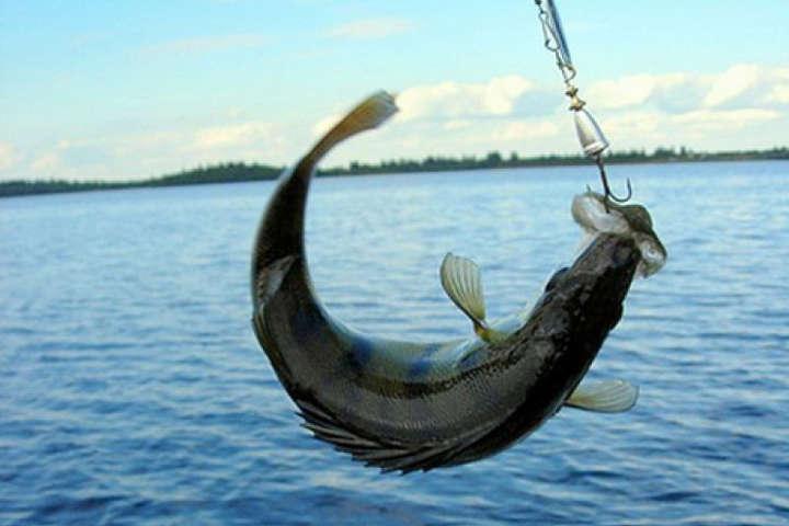 Причиною перенесення заборони є потепління, яке, найімовірніше, посприяє ранньому нересту - У Києві цього року заборонять ловити рибу раніше, ніж зазвичай