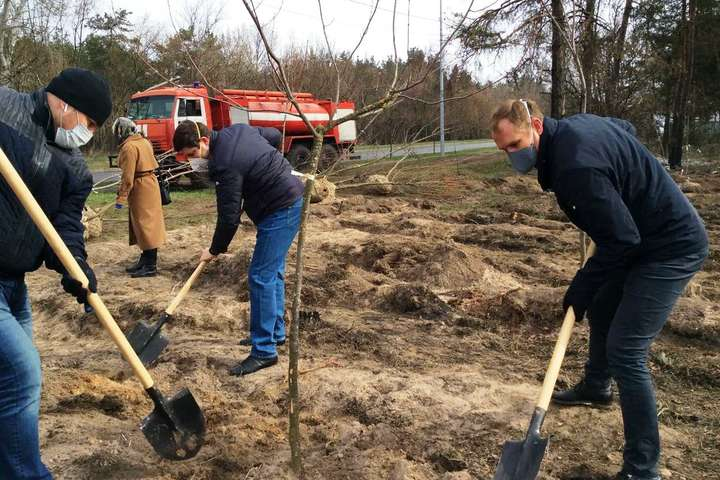 Висадка дерев на місці знищених - На місці отруєних сосен біля метро «Лісова» висадили дерева (фото)
