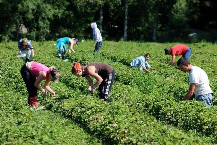 На заробітки до Польщі вирушили 186 українських працівників — З України до Польщі вилетіло два чартери із заробітчанами