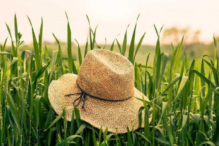 <p>Всього приватних підприємств, які вели діяльність в 2019 році, в Україні зареєстровано більше 200 000</p> — В Україні підрахували кількість фермерських господарств