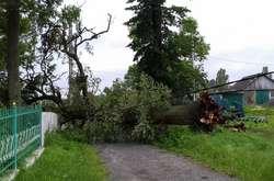 Фото: — Ураган вивертав дерева з корінням