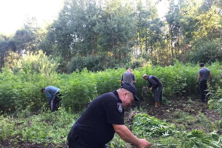 У лісі на Київщині поліція виявила плантацію конопель (фото)