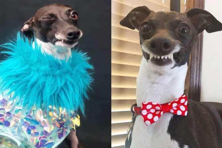 Дурашливая собака покорила хозяйку и подписчиков своими эмоциями (фото)