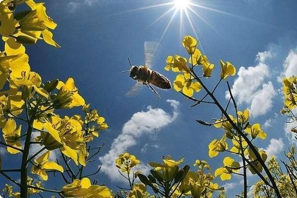 В Україні буде сонячно та без опадів - В Україні буде сонячно та без опадів: прогноз погоди на 13 вересня