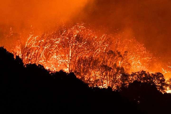 У США кількість жертв лісових пожеж зросла до 33 - У США кількість жертв лісових пожеж зросла до 33