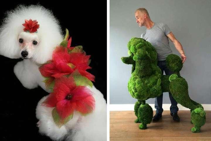 Издевательство или искусство? Фото очень странных собачьих стрижек