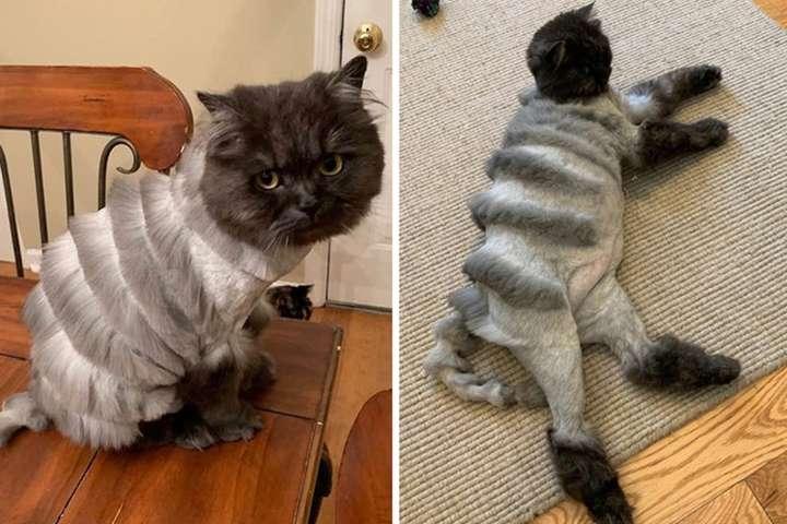 Хозяин кота сделал питомцу чудовищно смешную стрижку и стал звездой интернета (фото)
