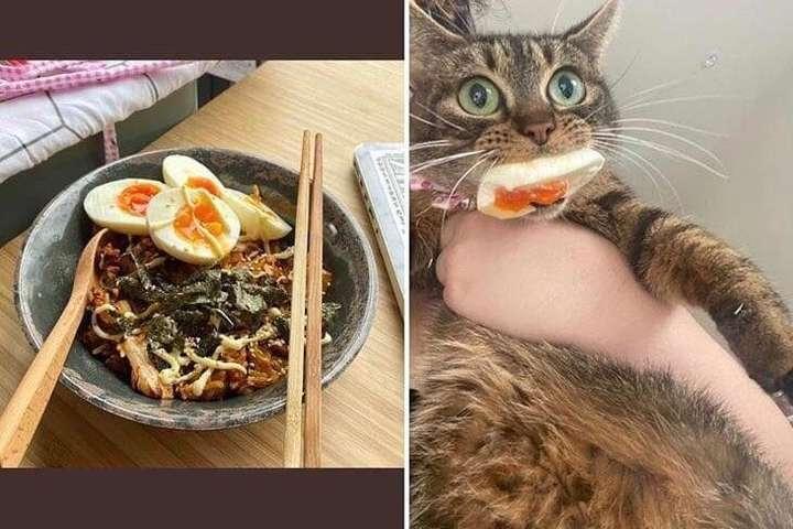 Когда коты установили свои правила в доме и показали, кто на самом деле хозяин (фото)
