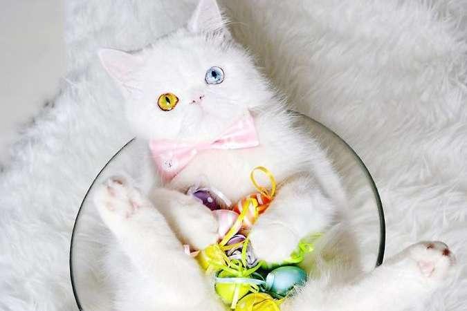 Пушистик с другой планеты: котенок с необыкновенными глазами загипнотизировал Инстаграм