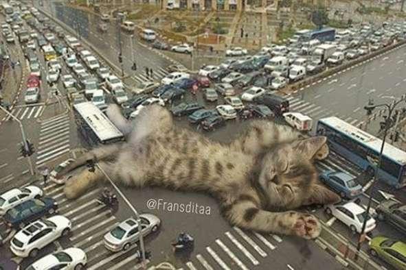 Коты-гиганты стали причиной пробок на дорогах (фото)