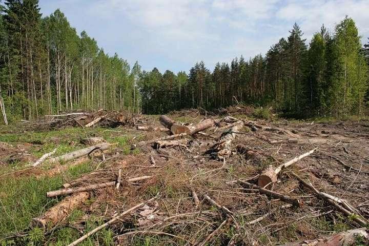 Чим небезпечна вирубка лісів в Україні (відео)