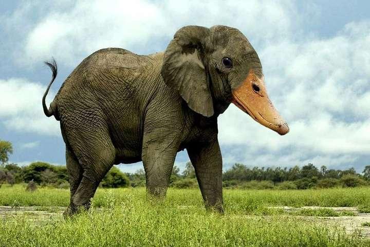 Уткослон и орлоконь: художник создает причудливые гибриды животных (фото)