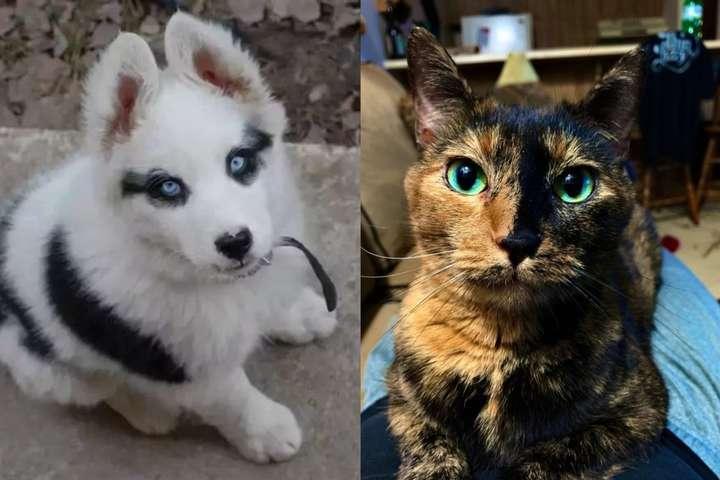 Эти животные даже не представляют, насколько уникальна их внешность (фото)