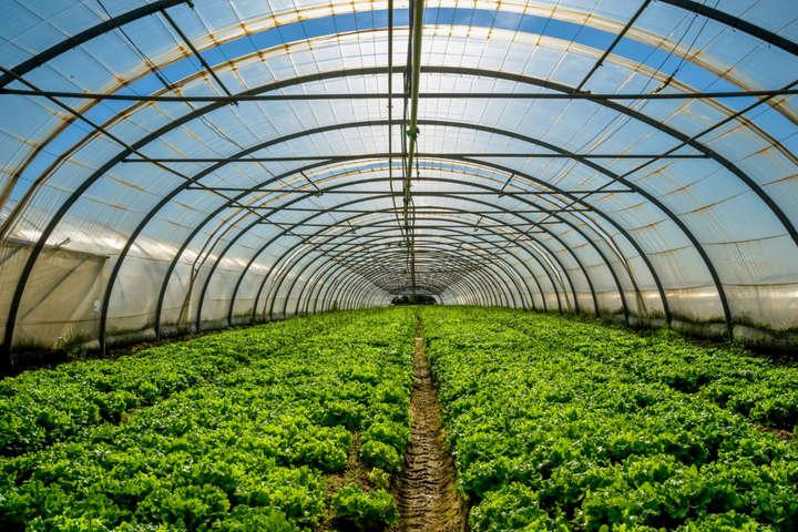 pЗелені плантації в Англії/p p/p p/p - В Британії почали займатися водневим садівництвом