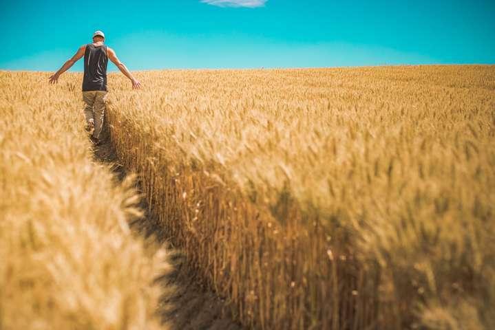 Закон про ринок землі був прийнятий Верховною Радою 31 березня — Якою є справедлива ціна гектара? В уряді назвали цифру