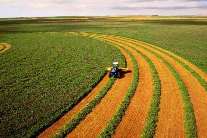 Два гектари землі держава гарантує кожному українцеві — Законні два гектари: як отримати у власність землю без додаткових витрат (інструкція)