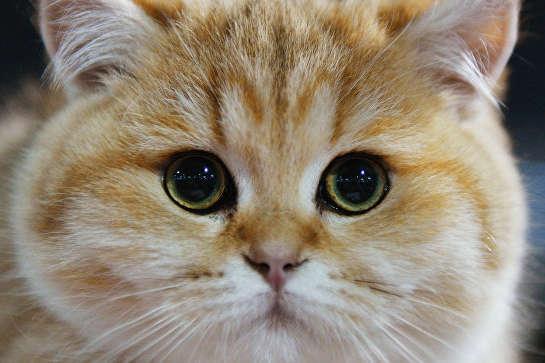 Чоловік своєї провини не заперечує - Жорстоке поводження з тваринами: на Одещині чоловік застрелив чужу кішку