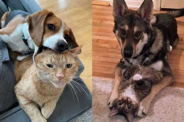 Курьезные фото о сложных отношениях кошек и собак, которые сделают ваш день
