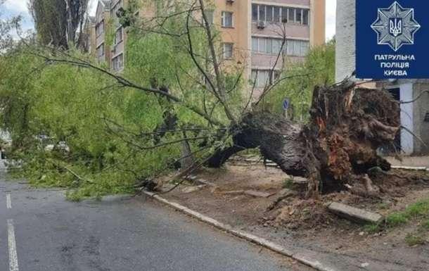 Сильний вітер у Києві зламав декілька дерев (фото)
