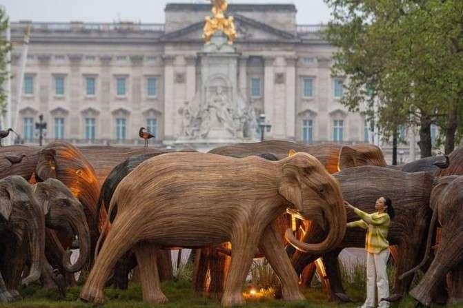 Після перформансу слонів виставлять в лондонських парках, а потім дерев'яні моделі будуть виставлені на продаж - Активісти встановили біля Букінгемського палацу 125 дерев'яних слонів