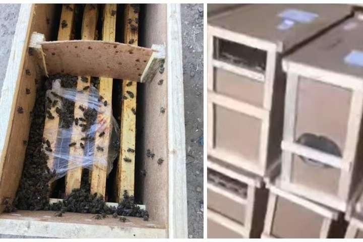 «Укрпошта» публічно закликає відправників забрати бджолопакети і забезпечити належні умови утримання - «Укрпошта» не може позбутися бджіл, які ожили