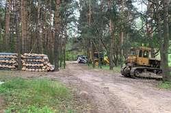 Фото: - За кілька днів унікальність лісу нещадно була зруйнована бульдозерами