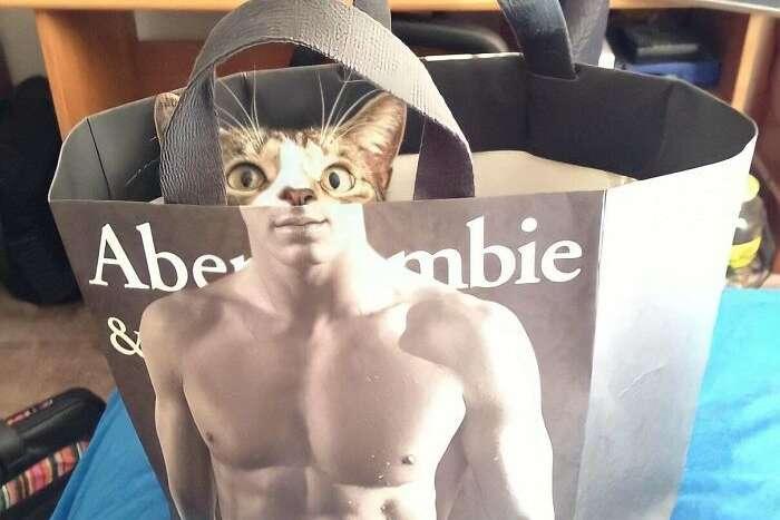 Курьезные фото котиков, которые скрасят даже самый неудачный день