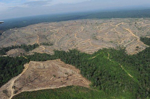 Вирубка лісу відбувається варварським шляхом