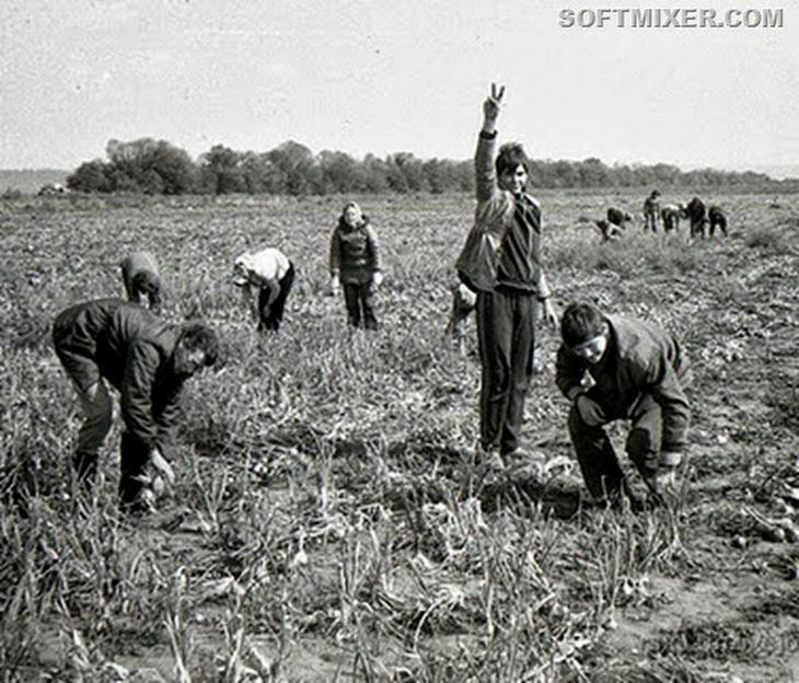Картинки с изображением труда колхозников на полях весной