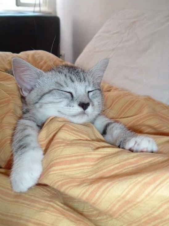 Как спят коты рисунки