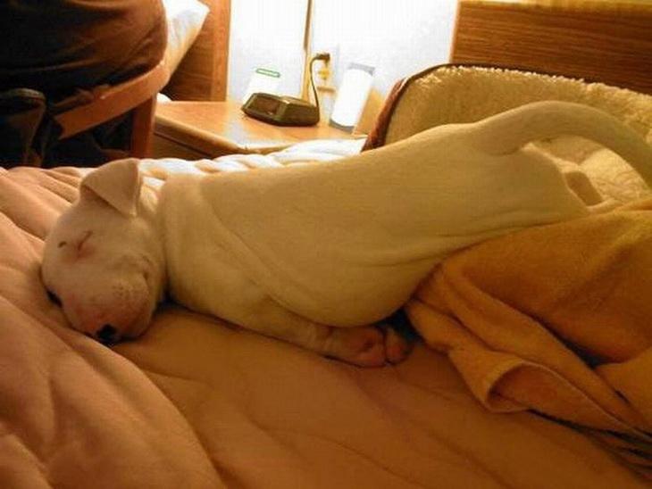 Фото невероятные позы, анал с геной букиным