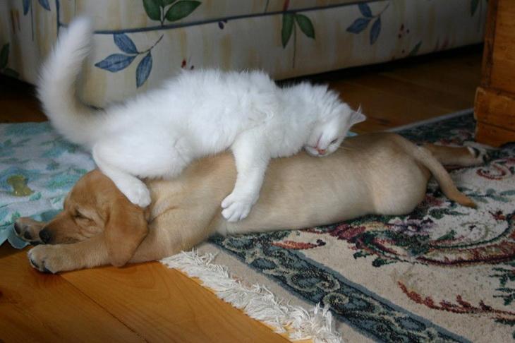 Большое значение при толковании этого сна имеет окрас собаки.