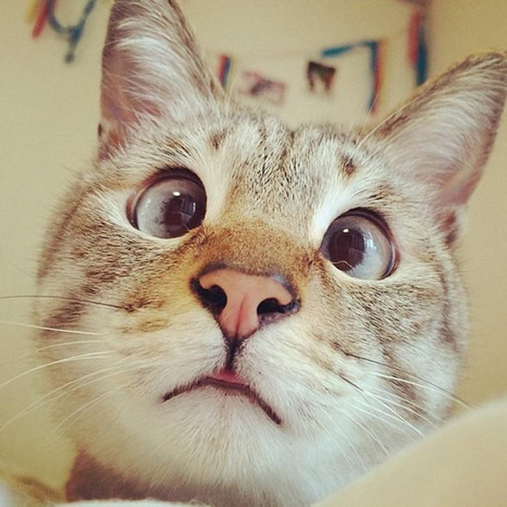 Картинки котиков прикольные на аву