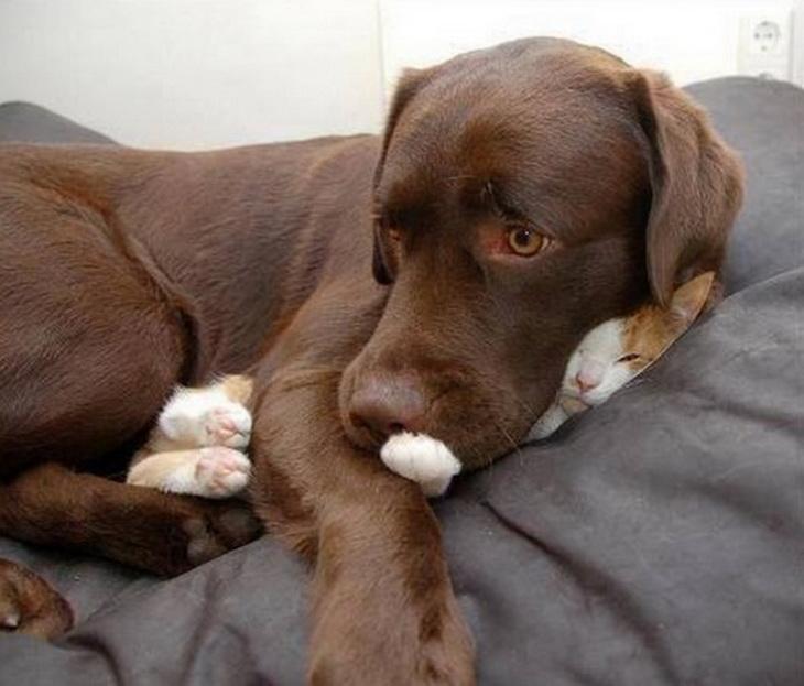 Прикольные картинки собак и котов с надписями