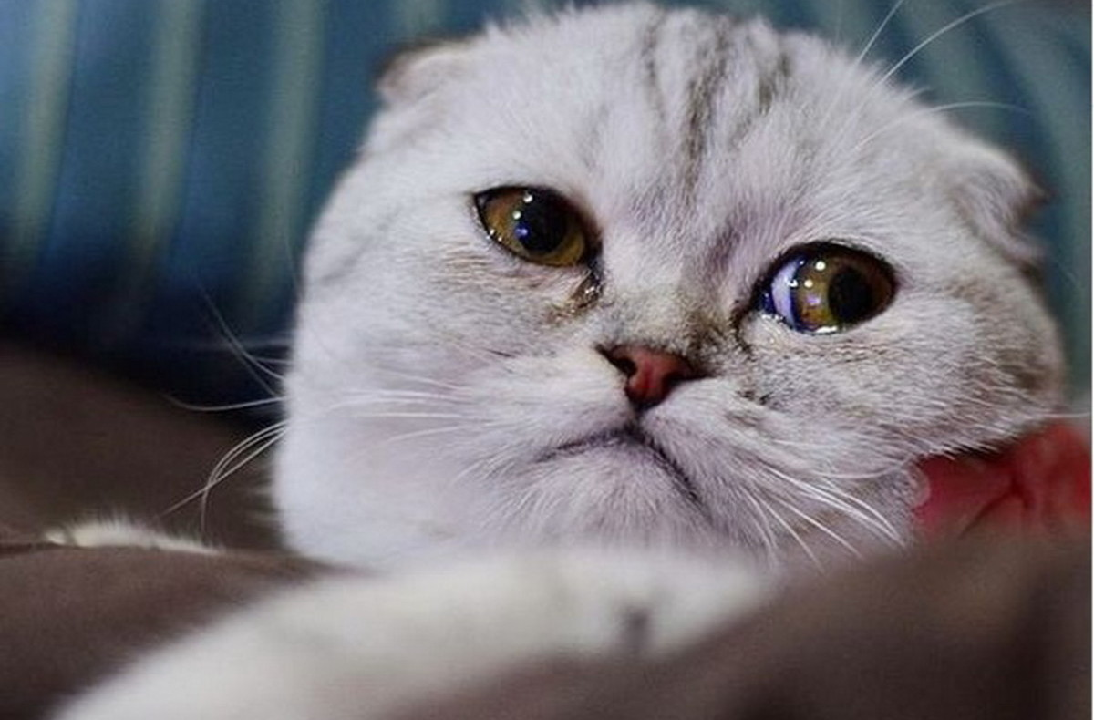 Картинка очень грустный кот