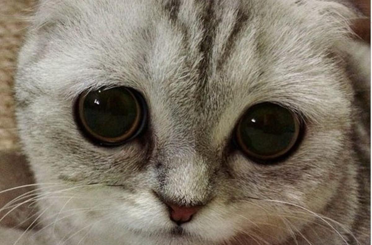 Тебе, картинка с грустным котиком