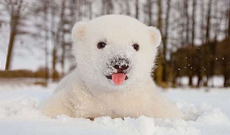 Котенок в снегу картинки