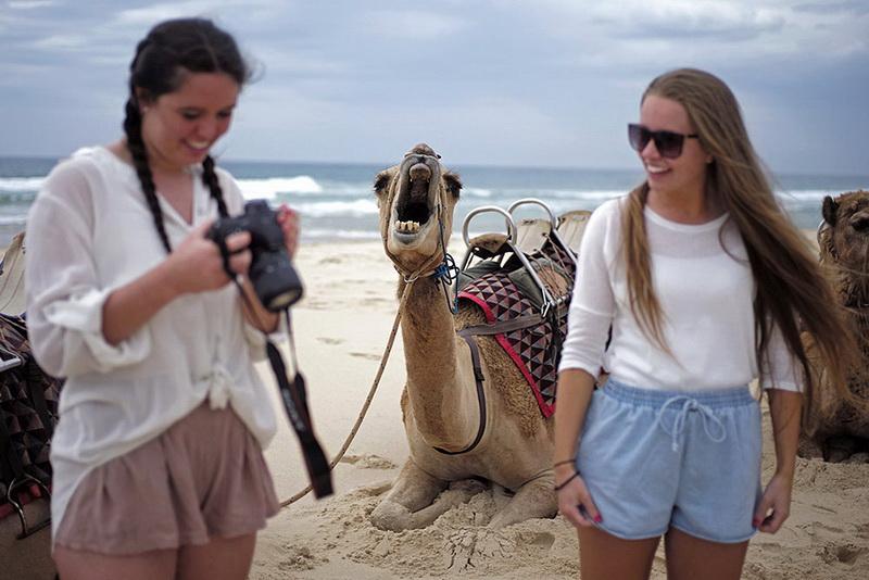 Туристы забавные картинки