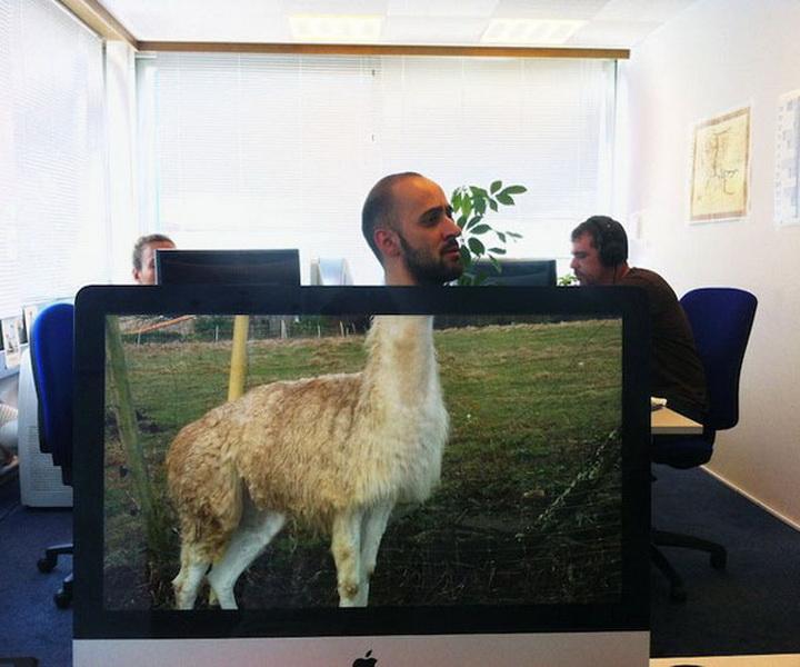 Работа в офисе прикол картинки, прикол волейбол открытка