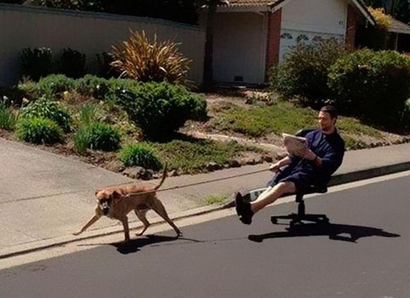 Поздравления юбилеем, гулять с собакой смешные картинки