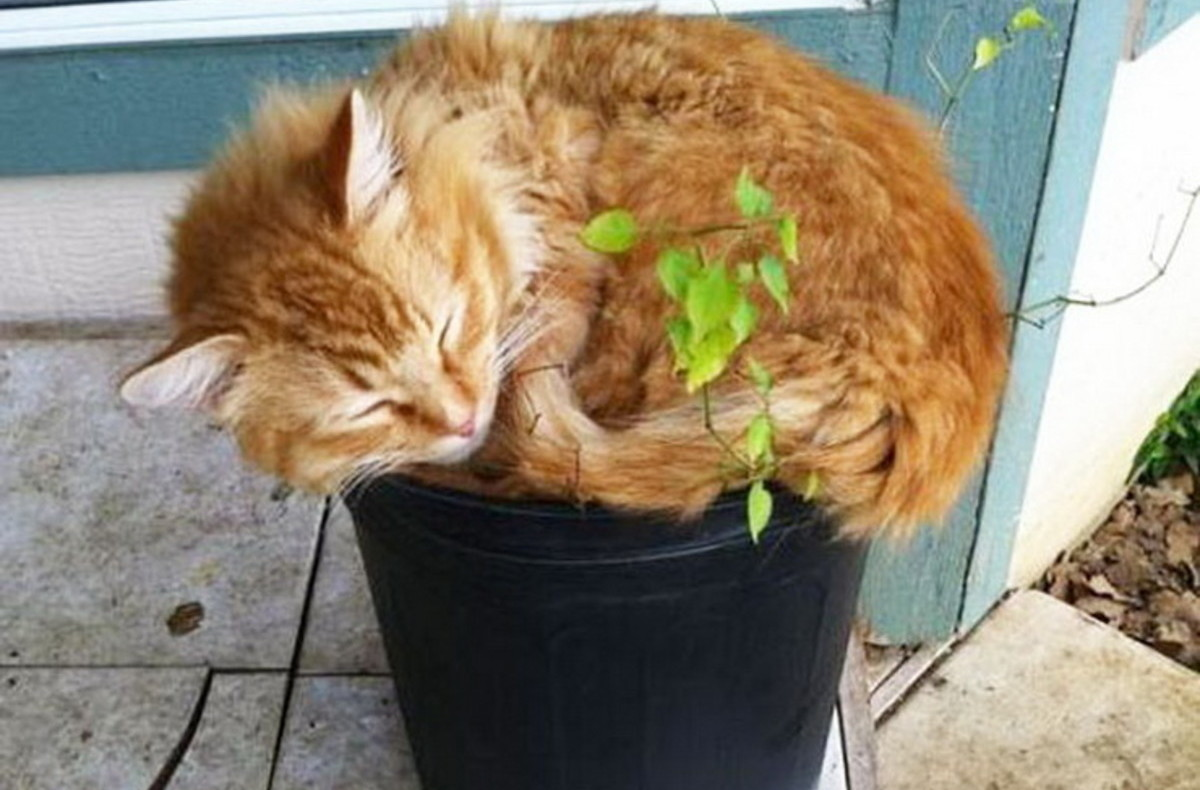 Как защитить цветы от кошек фото